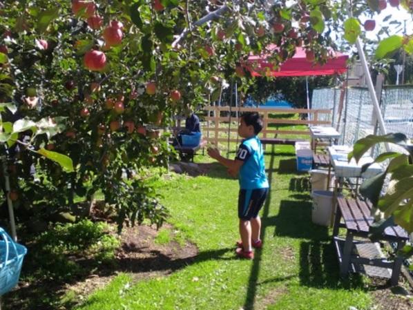 群馬県沼田市 りんご園 りんご狩り 時期 品種 おすすめ